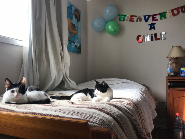 "My bed in my homestay. The sign says, ""Welcome to Chile"" and the cats were two of the eight that lived in the house with us."