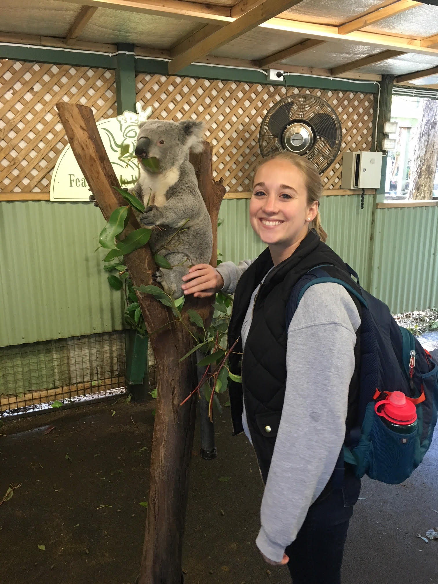 Helen with a koala at Featherdale wildlife park.